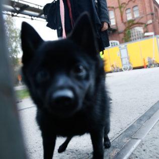 Ennakkonäytökset Konepajan Brunolla, karvakuonoja yleisössä. Kuva Aleksi Kinnunen.