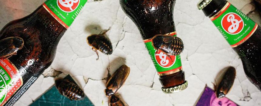 Bugs_BB_Web